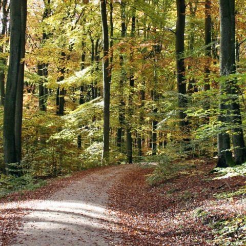 Ökologie/Wald
